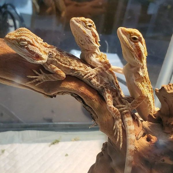 More Info for Repticon