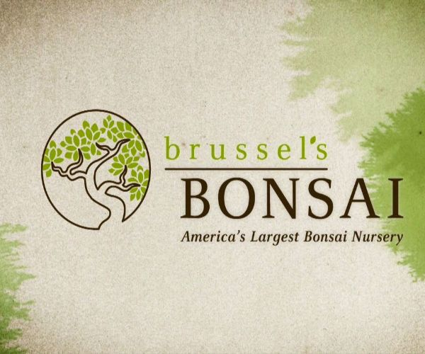 Brussel's Bonsai Nursery