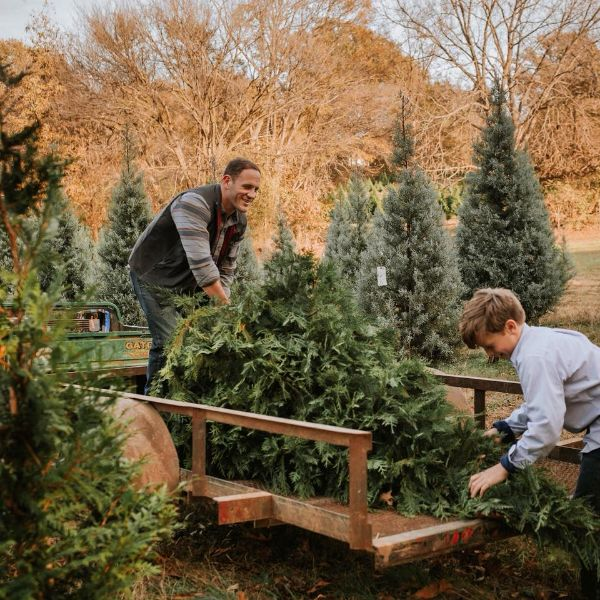 More Info for Christmas Tree Farm