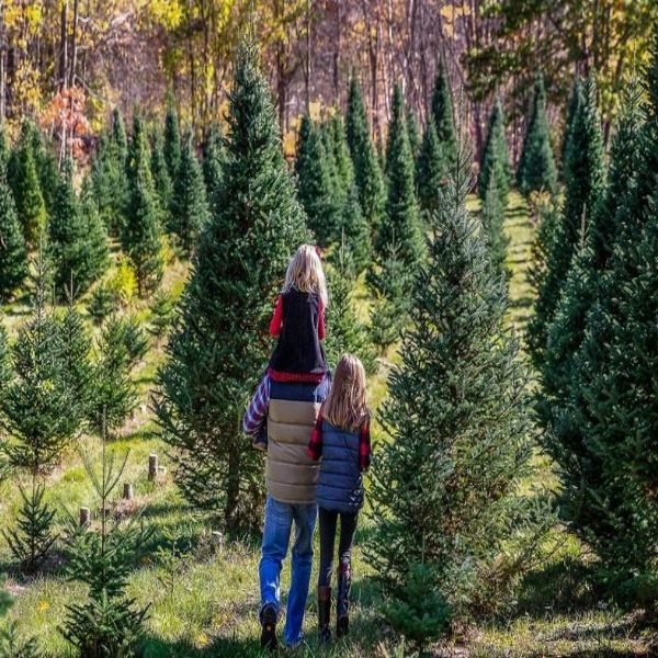 More Info for Merry Christmas Tree Farm